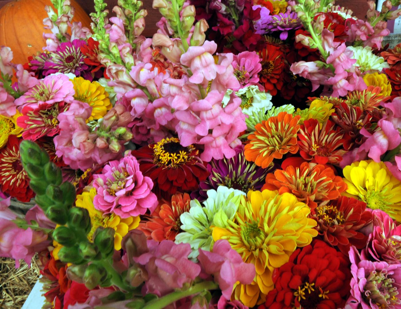 Fresh cut flower bouquets tomorrow