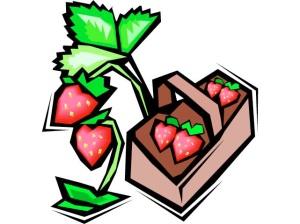 1strawberry9
